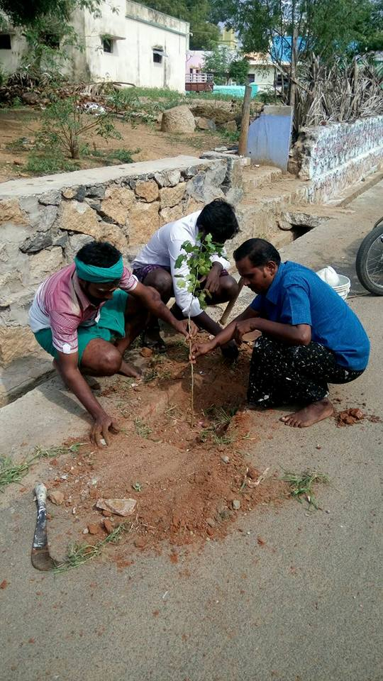 keela-surandai-agni-sirakukal-in-sapling-planting